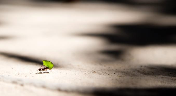 ¿Qué son los gastos hormiga y cómo huir de ellos?